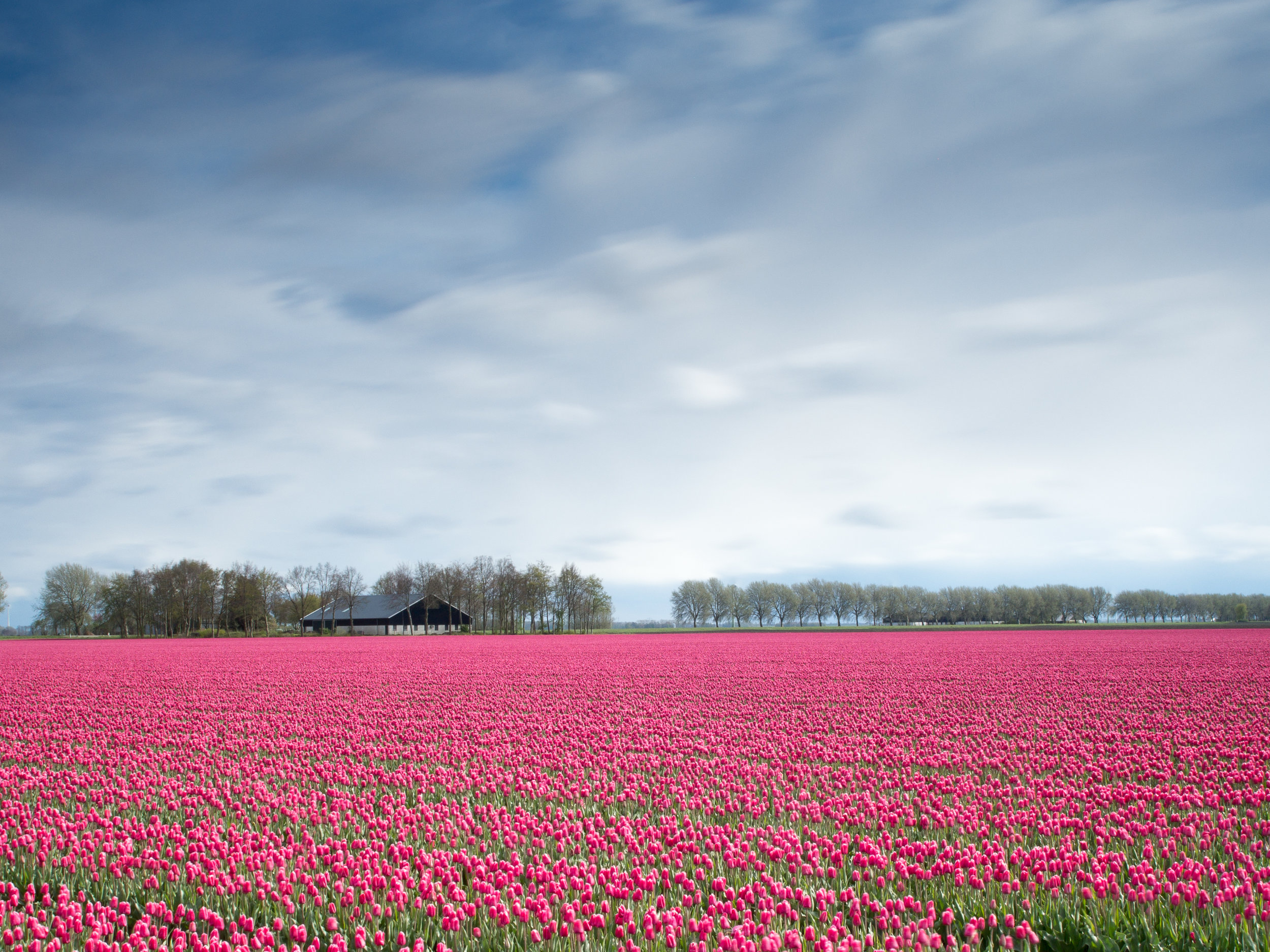 Garden and Nature travel, think the Tulip Time river cruise in April (Amsterdam) would be simply breathtaking