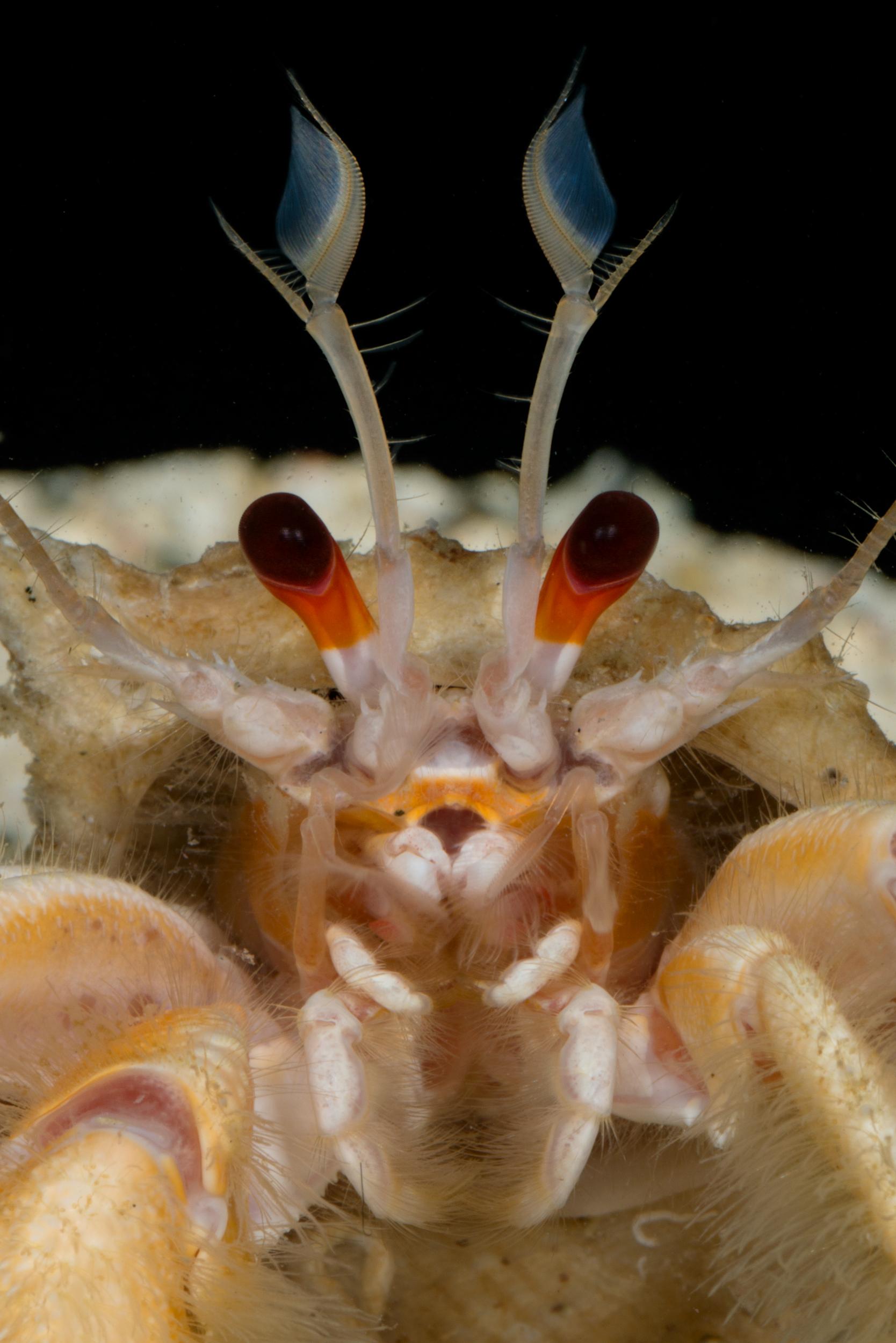 Crab Face.JPG