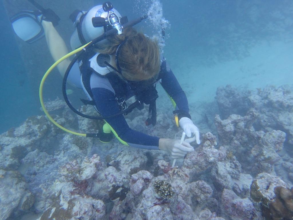 Transplanting coral
