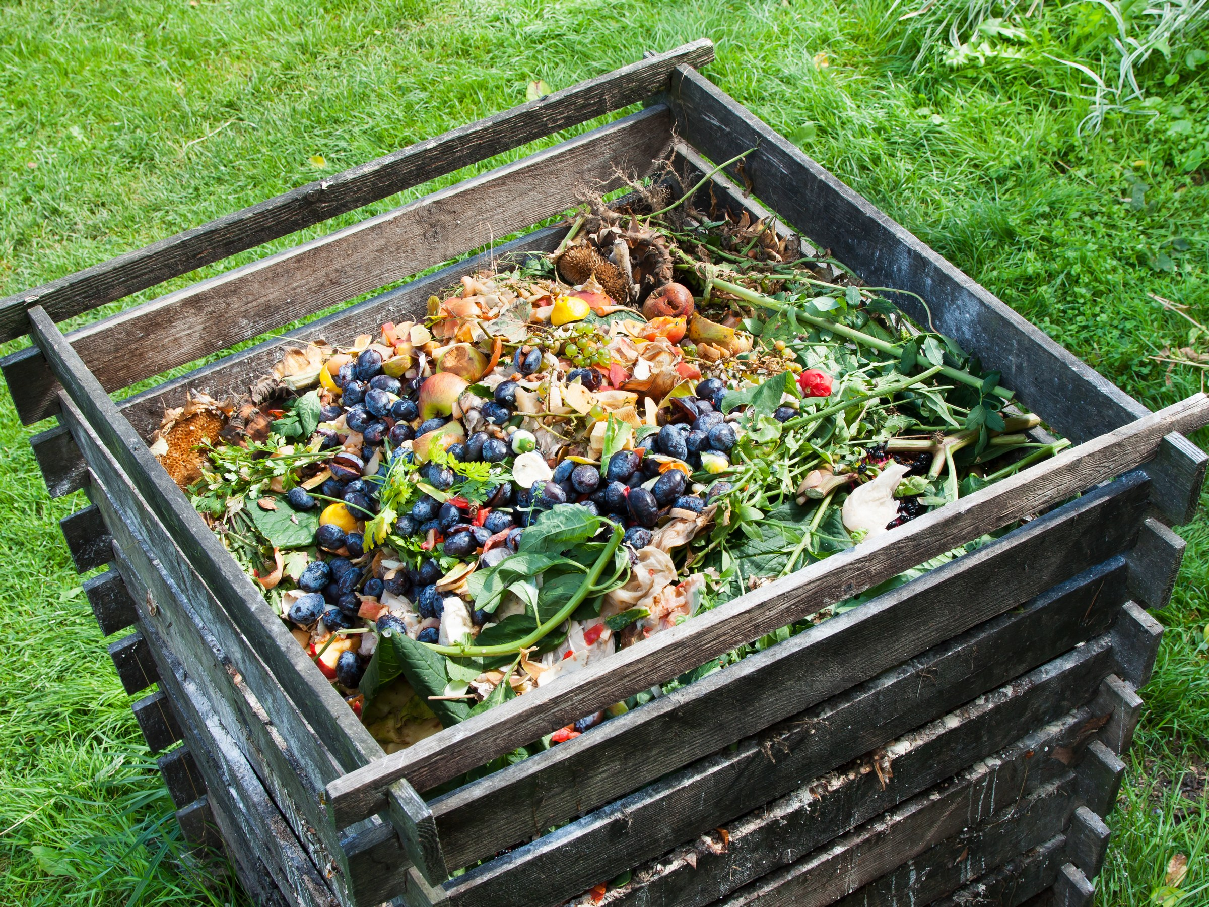 compost-488988734.jpg