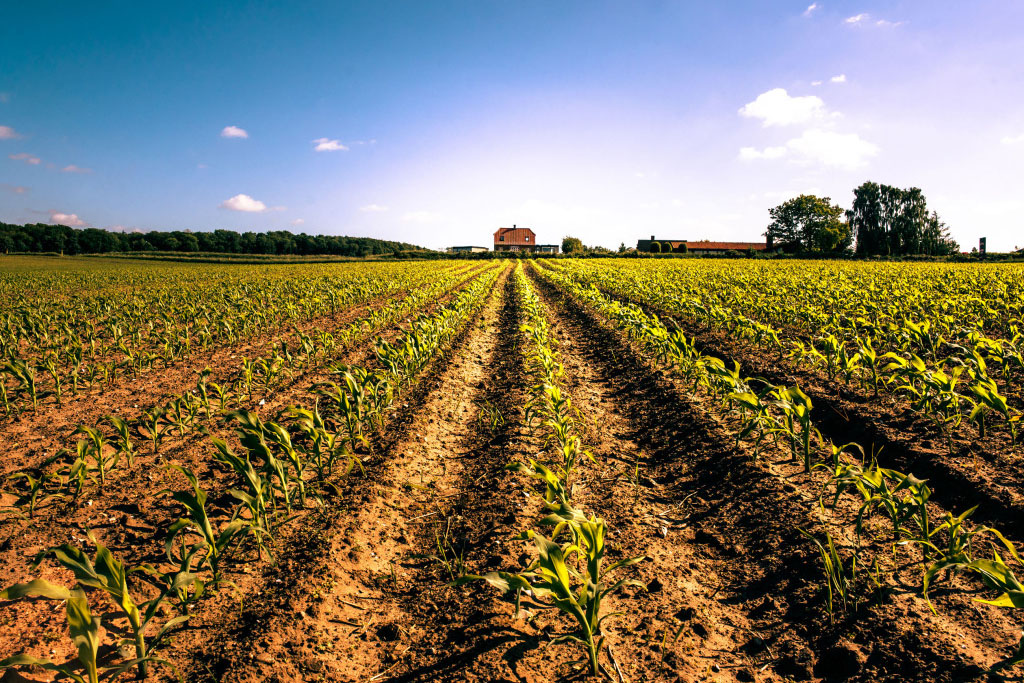 crops-1024x758.jpg