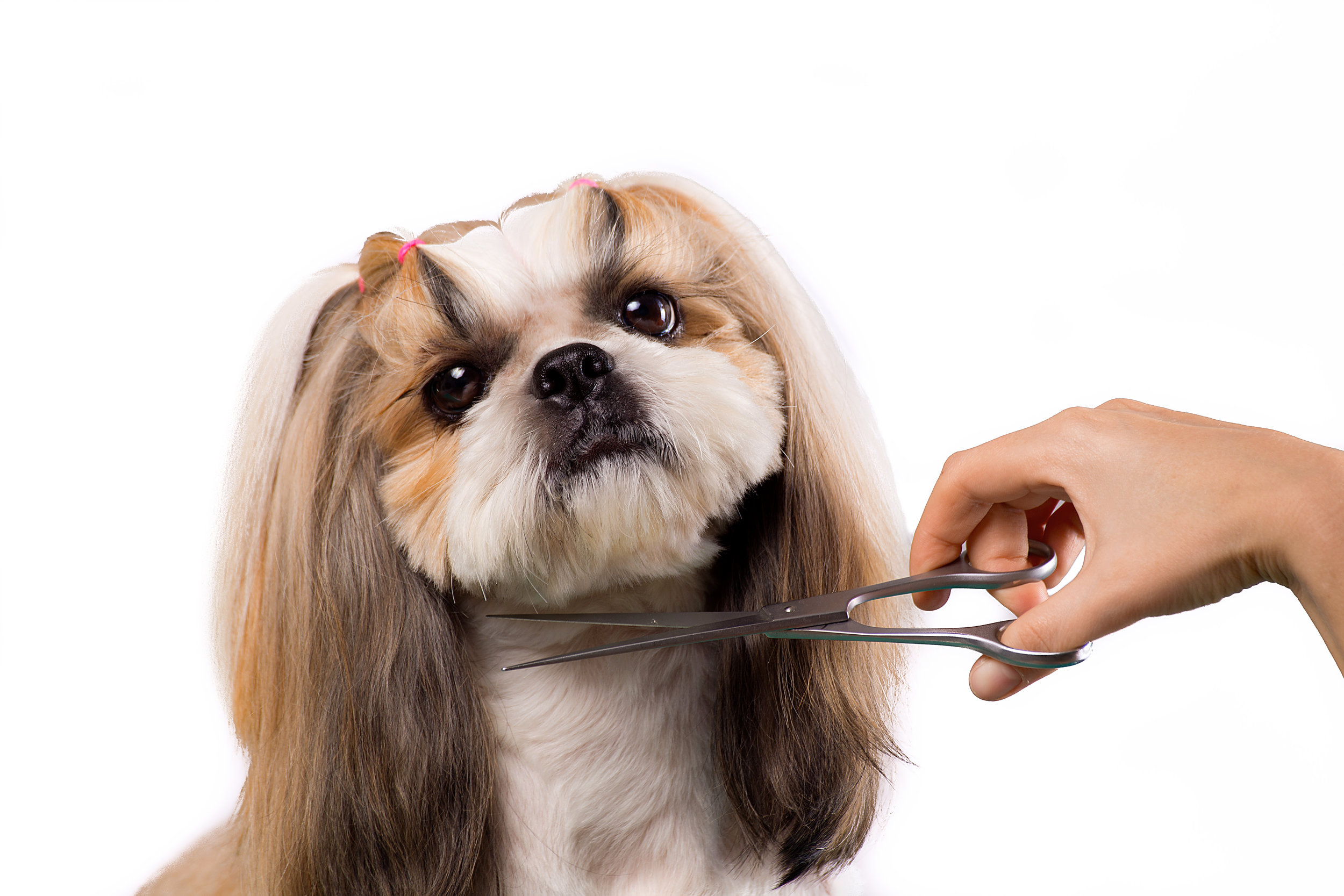 Grooming - We offer a full grooming experience for Dogs and Cats .