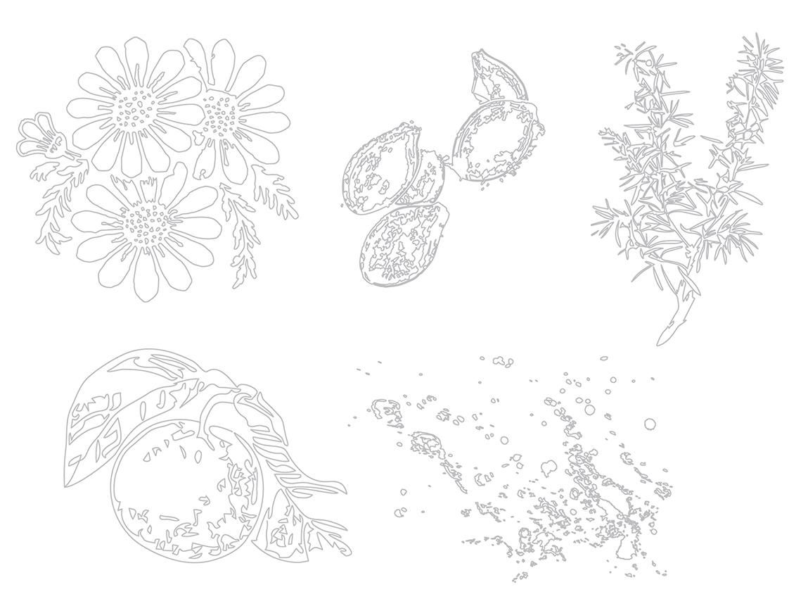 almanac_organics_illustrations.jpg