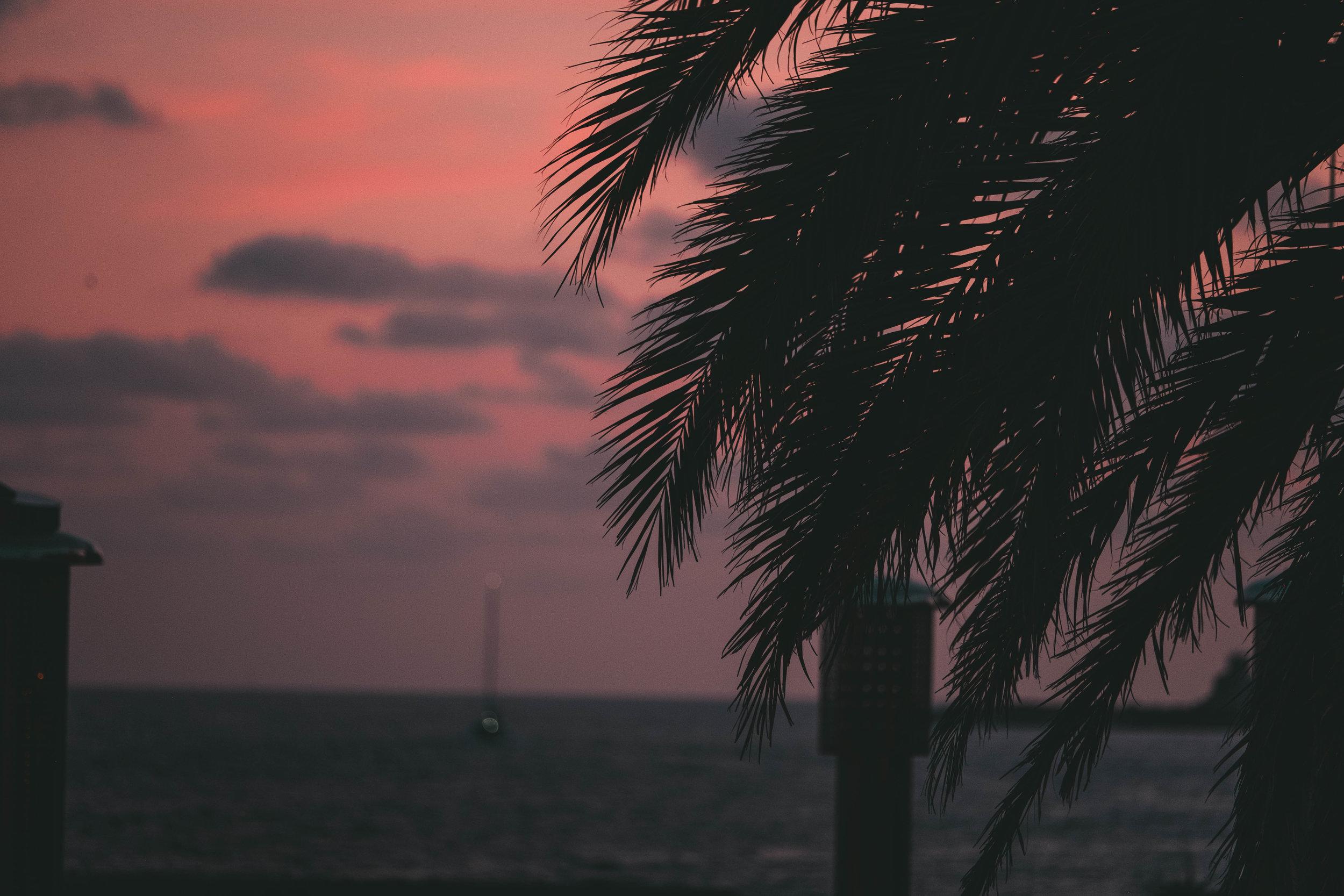 Palms in Palma.