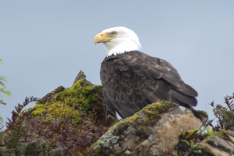 bald eagle rocks.jpg