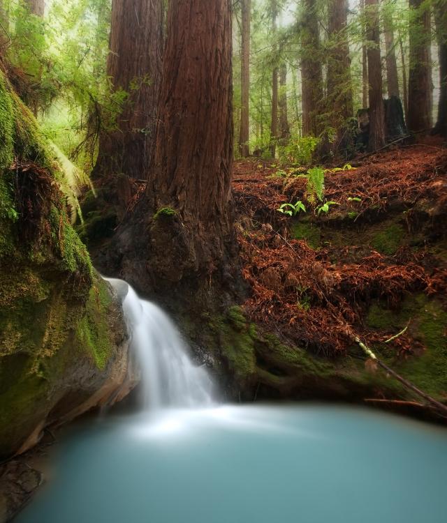 redwoods pool.jpg
