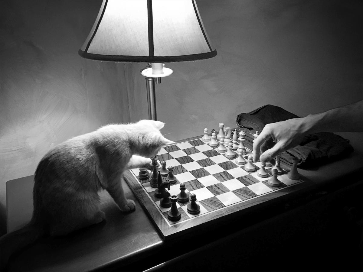 cat-chess-small.jpg
