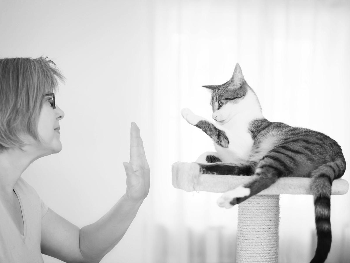 cat-hi-5.jpg