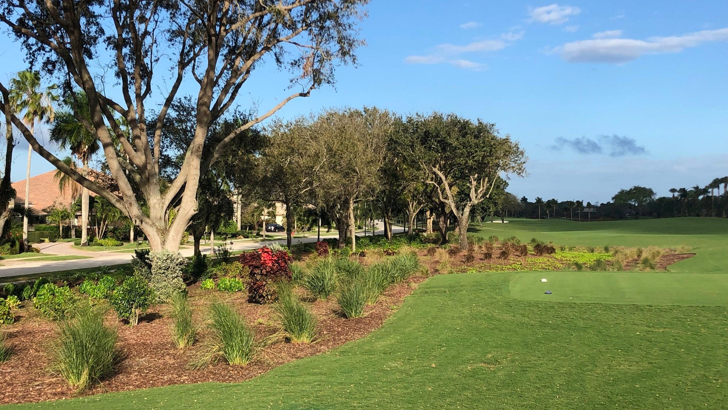 Tree Garden.JPG