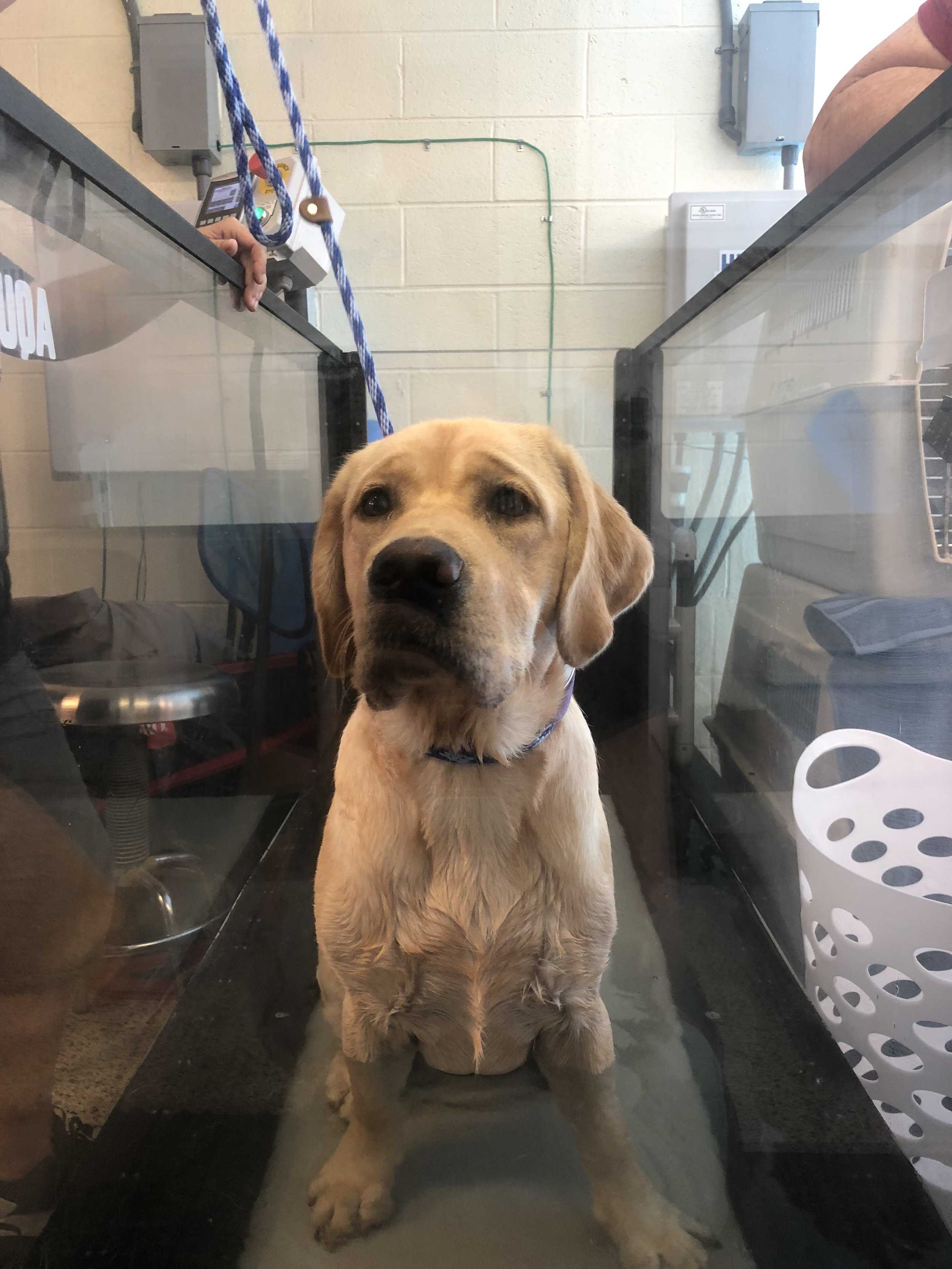 Isn't he cute?? - Puppies Behind Bars is an incredible program that I am very passionate about.Check out their website:  https://puppiesbehindbars.com