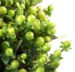 Hypercum Berries -