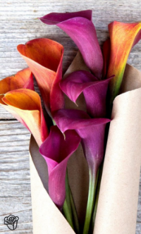 Calla Lily  - Rich and vibrant color, trumpet shape. Available year round.