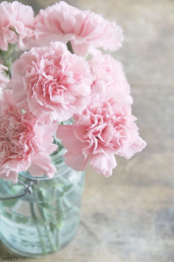 Carnation  - Traditional favorite, available in a rainbow of colors. Available year round.
