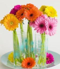 Gerbera  - Large, cheerful flower faces grow in a rainbow of pastel and saturated colors. A member of the daisy family.