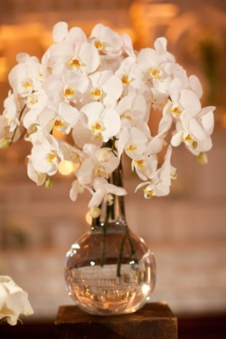 Orchid  - Exotic, Lush blooms with several vibrant colors. Available year round (Availability will be dependent upon grower. This is an upgraded bloom. Please add $20.00 for each bloom).