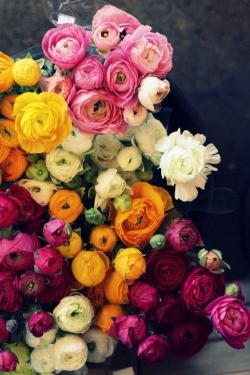 Ranuculus  - Cheerful colors and a full blossom. Available February - May.