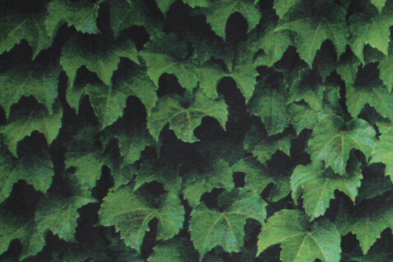 LUSH IVY (tapestry)