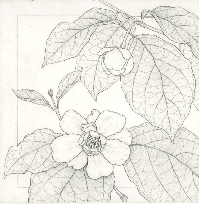 Chinese Sweetbush