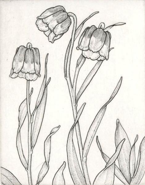 Fritillaria michailowski
