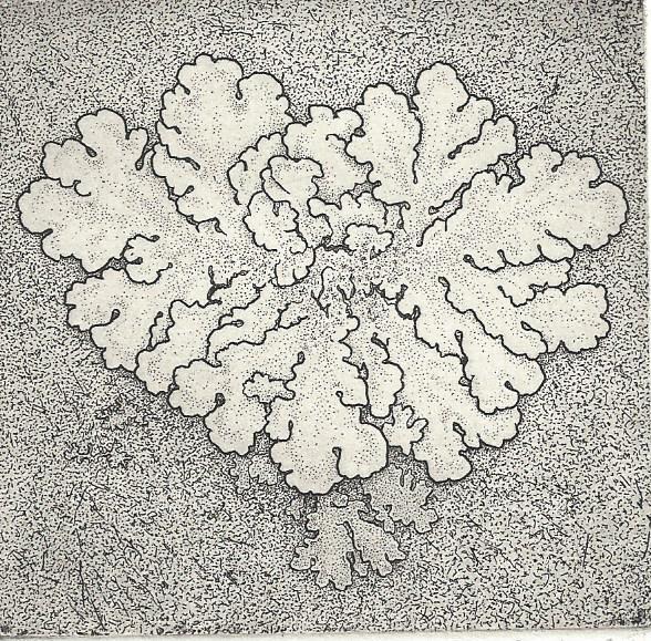 Greenshield Lichen