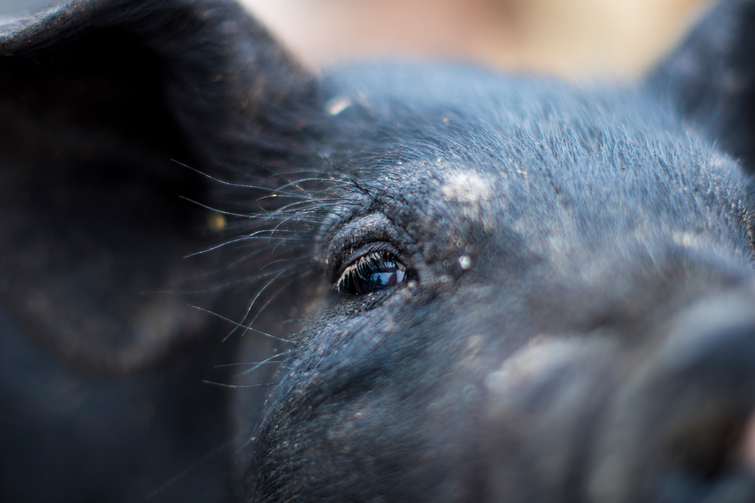 deutsch family farm pig 7.jpg