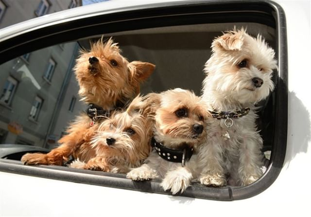 Pets drive around in our cars just like family.  Time for a car wash inside and out, don't forget about that carpet shampoo! You will need it! #maplewoodcarwash #gloucesterma #birdsandcars #carwash