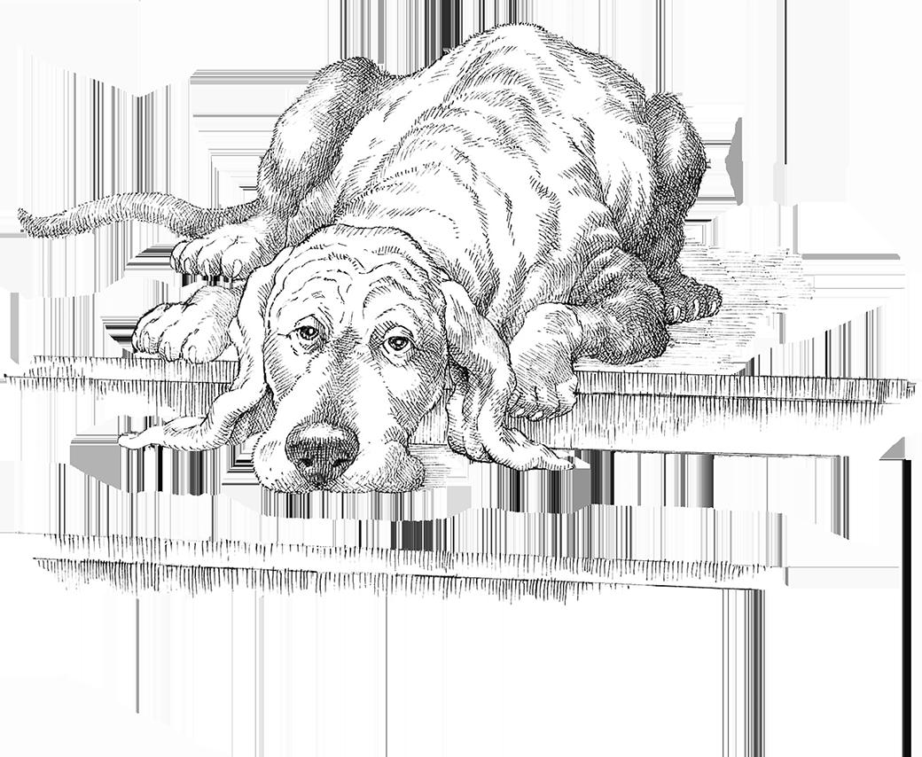 IASO_DogPorch-16-web.png