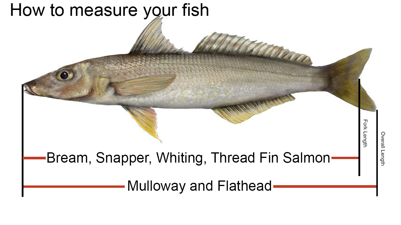 How to measure your fish.jpg
