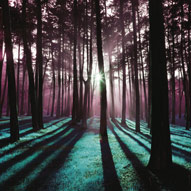 TR30947--Soderberg--Technicolor_Trees_3.jpg