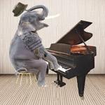 TR25167--Lew--Elephant_Pianist.jpg