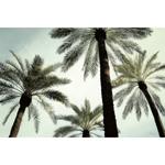 TR30558--West--Palm_Two.jpg