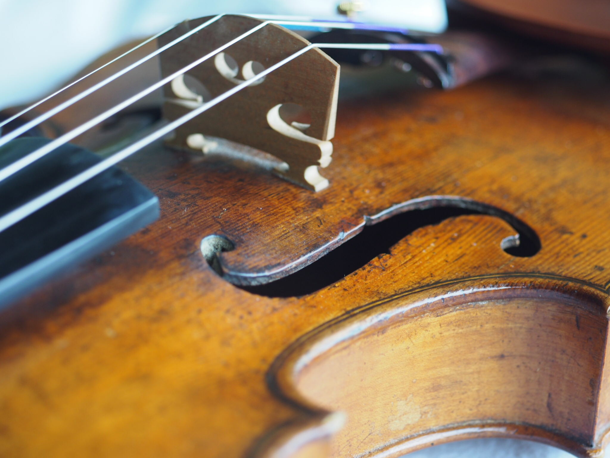 Have a question? - Ask Morganne about violin lessons or performances!