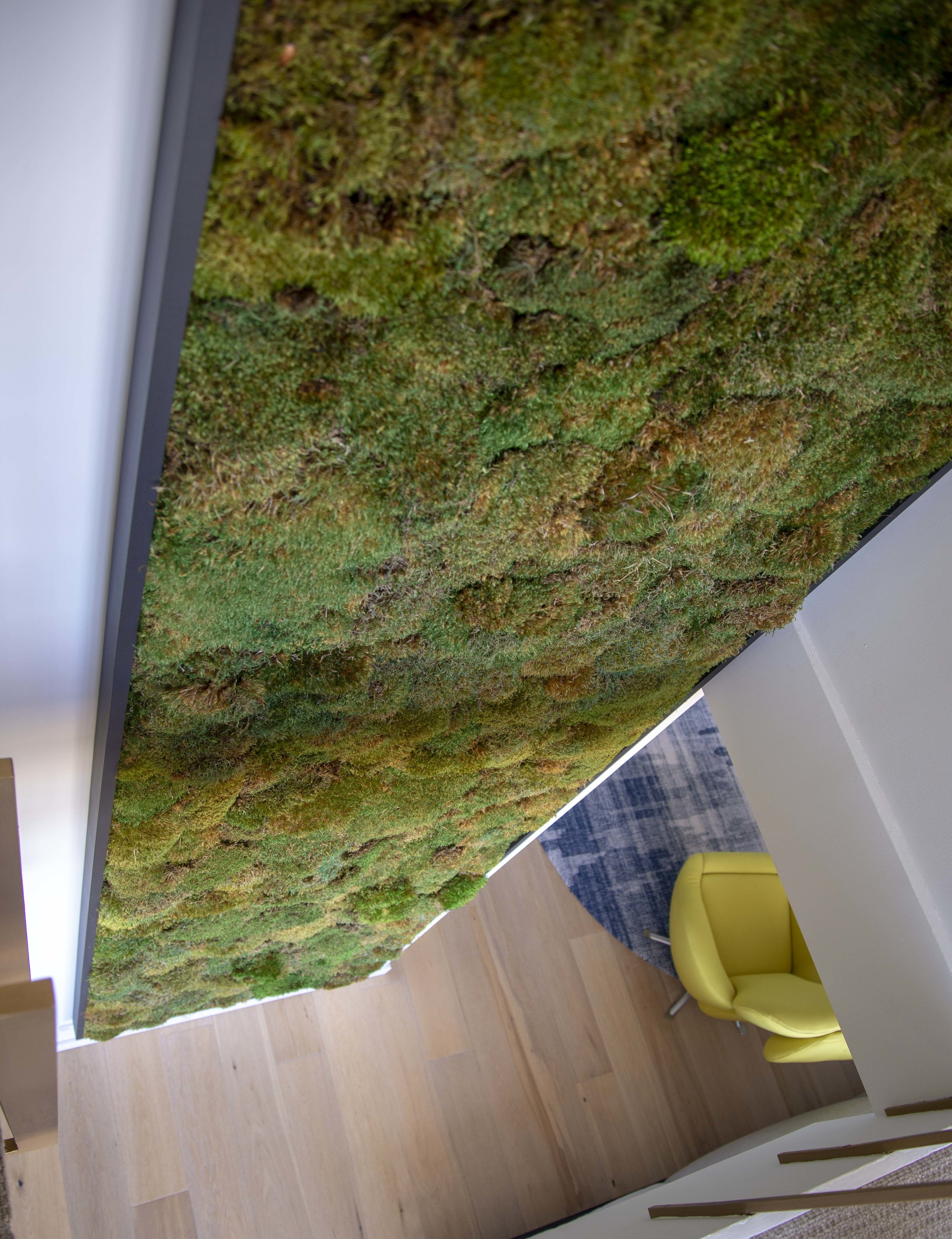 Big natural moss frame for a staircase opening in San Francisco by  The Gardenista .