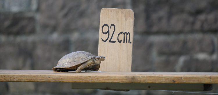 Pieter-Post-schildpad-750x330.jpg