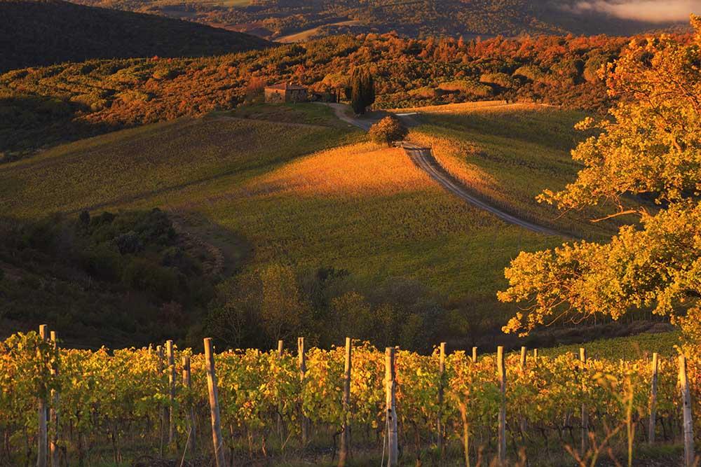 CASTIGLION DEL BOSCO - Winery in Val d'orcin
