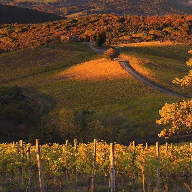 CASTIGLION DEL BOSCO - winery/tuscany