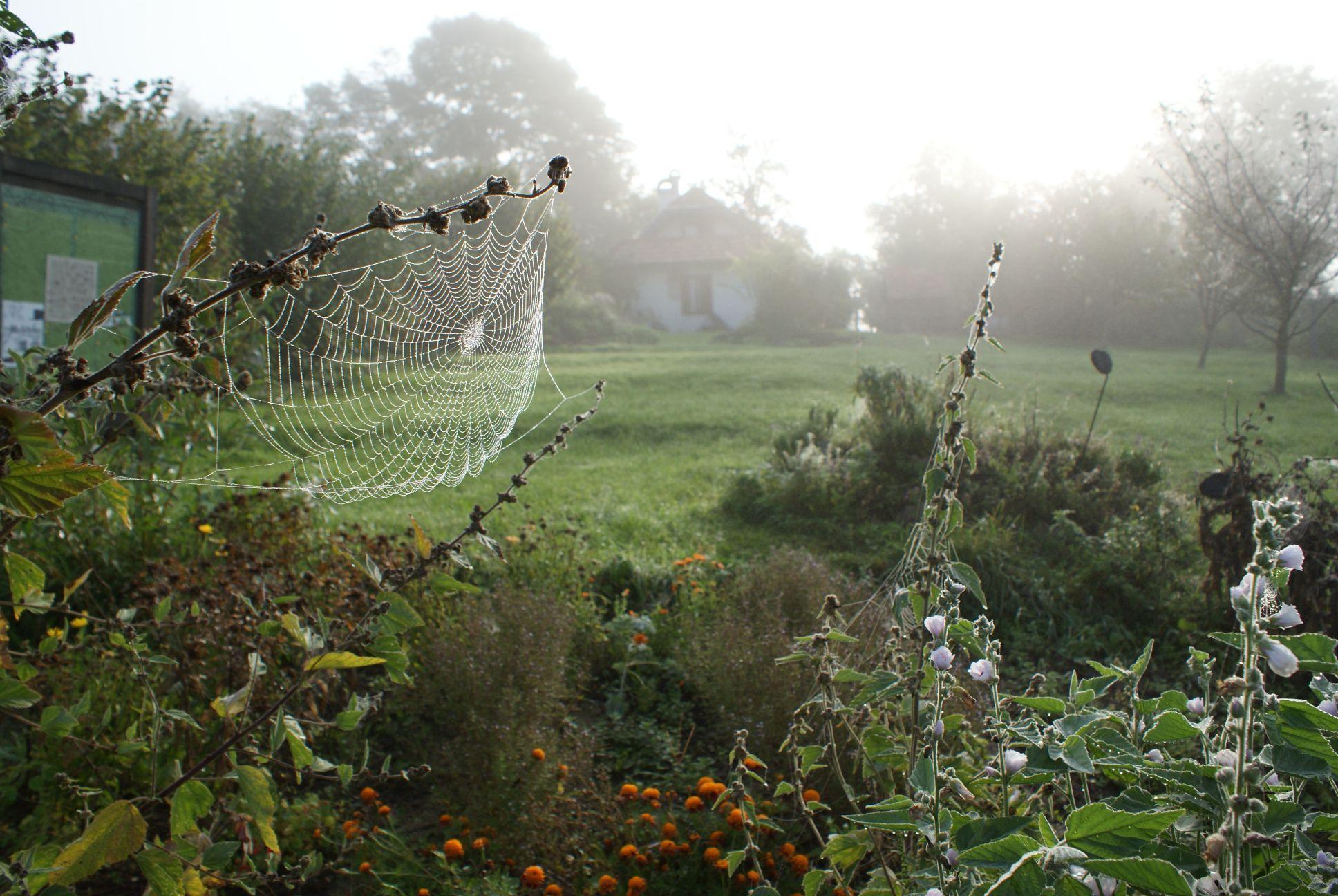 - Pénzesgyőri oktatóközpontunkhoz tartozik egy 7 hektáros gazdaság is, ahol a vegyszermentes gazdálkodás értékeit mutatjuk be az érdeklődőknek. Gyógy- és fűszernövény kerttel, mintaként szolgáló, a növénytársításokat figyelembe vevő és bemutató zöldségeskerttel, hagyományos fajtákból álló extenzív gyümölcsössel, a legelőn pedig népes nyájjal találkozhattok, ha meglátogattok minket.