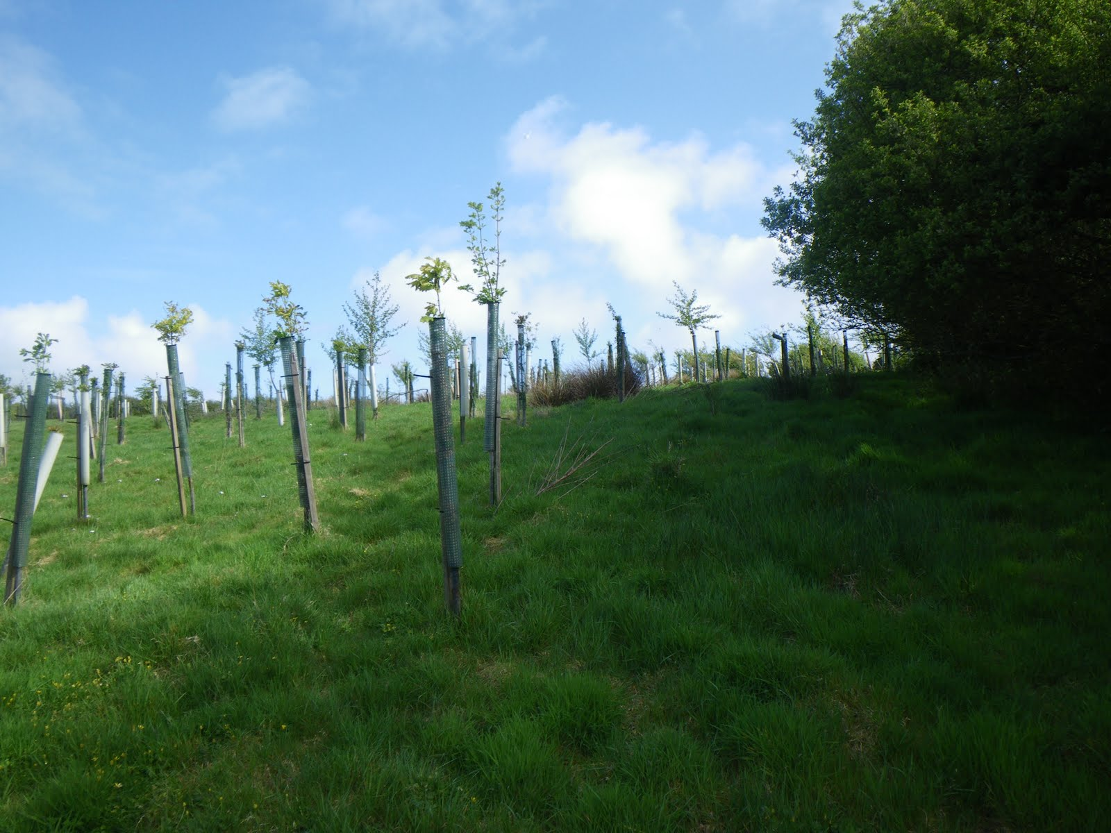 Field 2 Uphill May 09.jpg