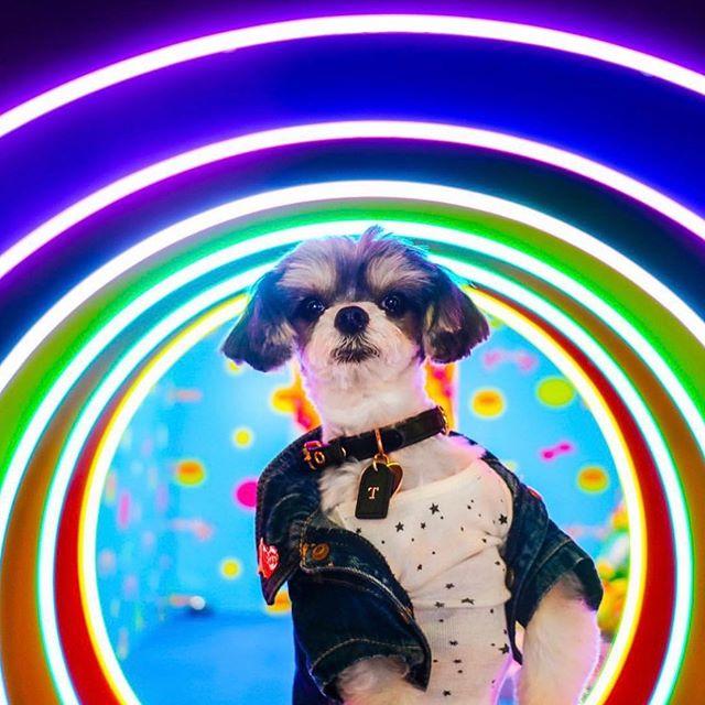 Pride Pup 🌈🐶 Happy World Pride! #pride #humansbf . . . . .  #dogsofinstagram #dogoftheday #doglove #puppylove #dogoftheday #dailywoof #loveislove #pridepup #worldpride #lovewins