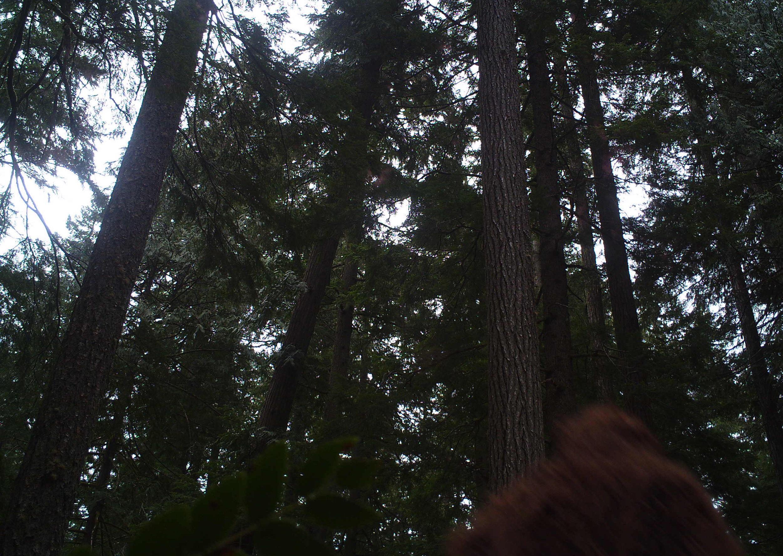 Sasquatch Sighting, Up