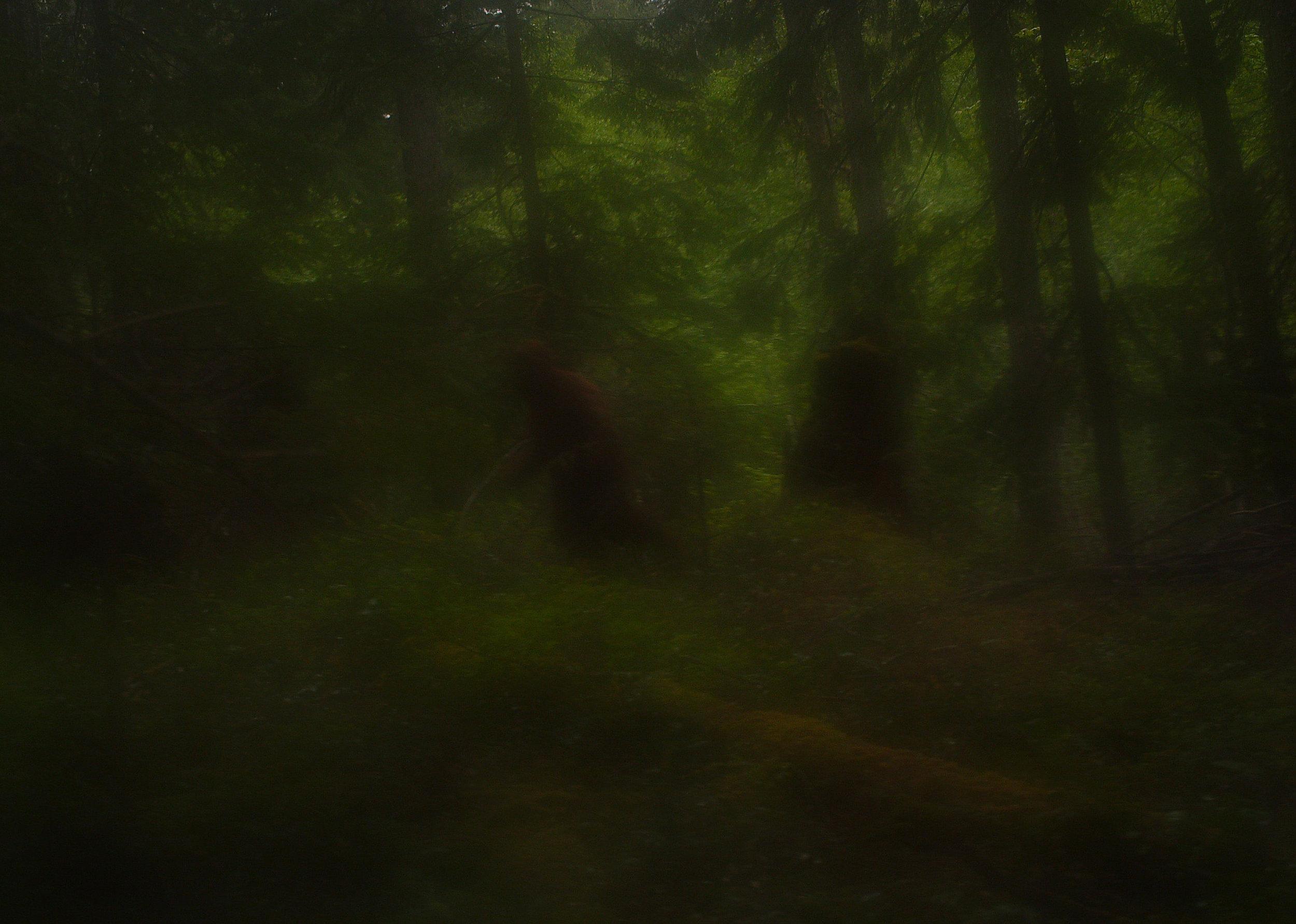 Sasquatch Sighting, Blurred Grove