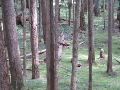Sasquatch Sighting, Stepping Down