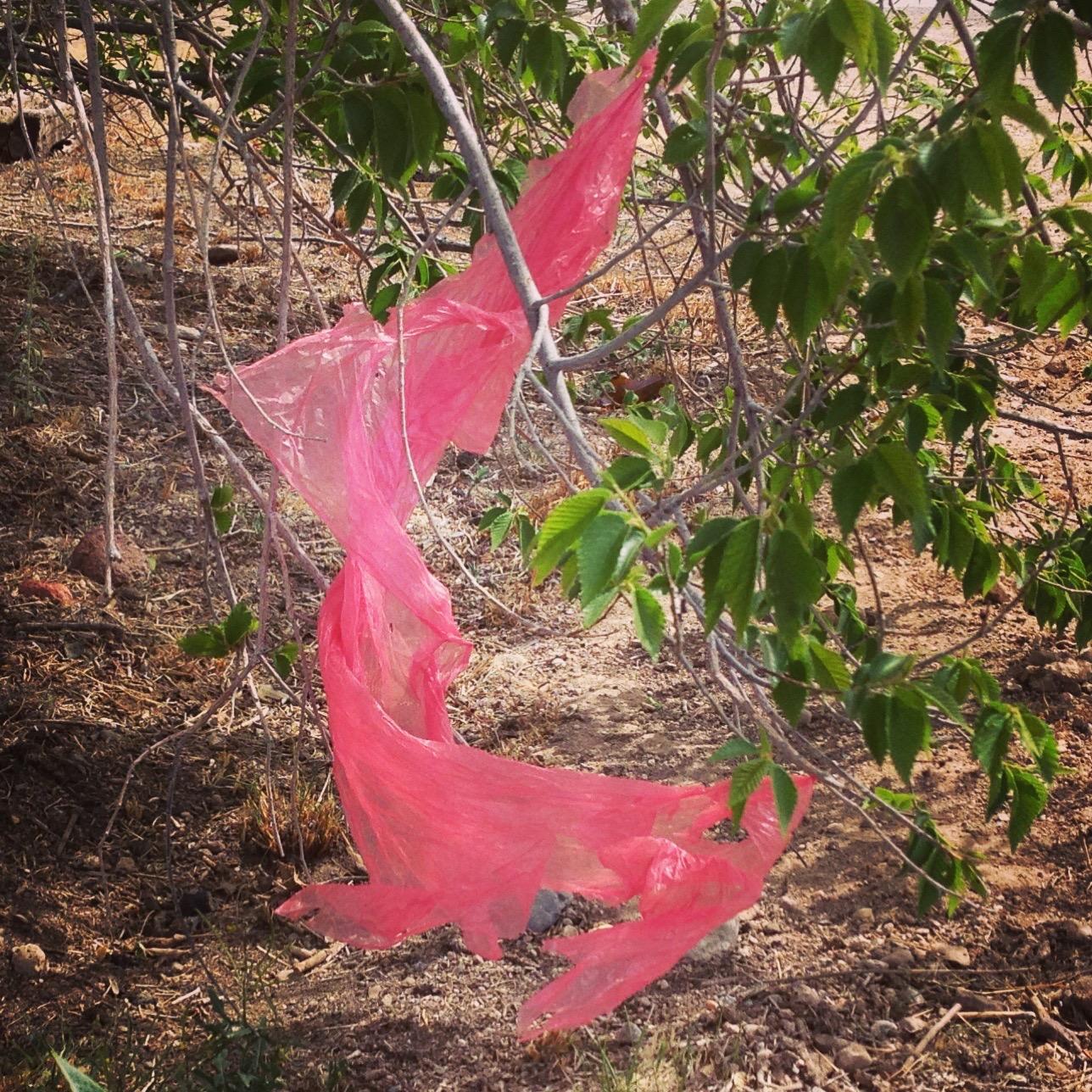 plastic bag of Marfa