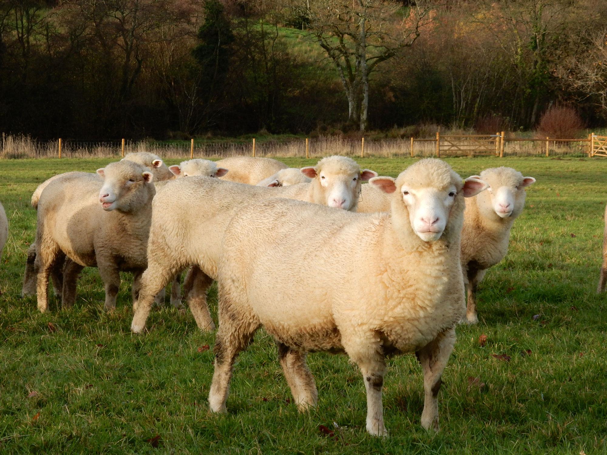 shearlings.jpg