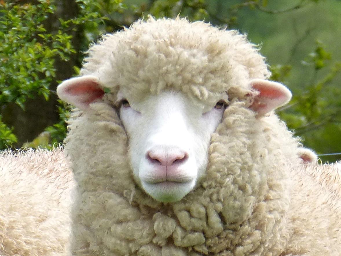 Shearling-head-(2).jpg