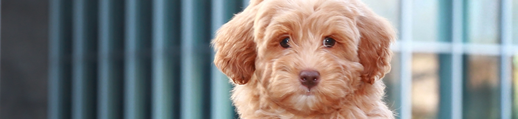 Breen Pup 1_color.jpg