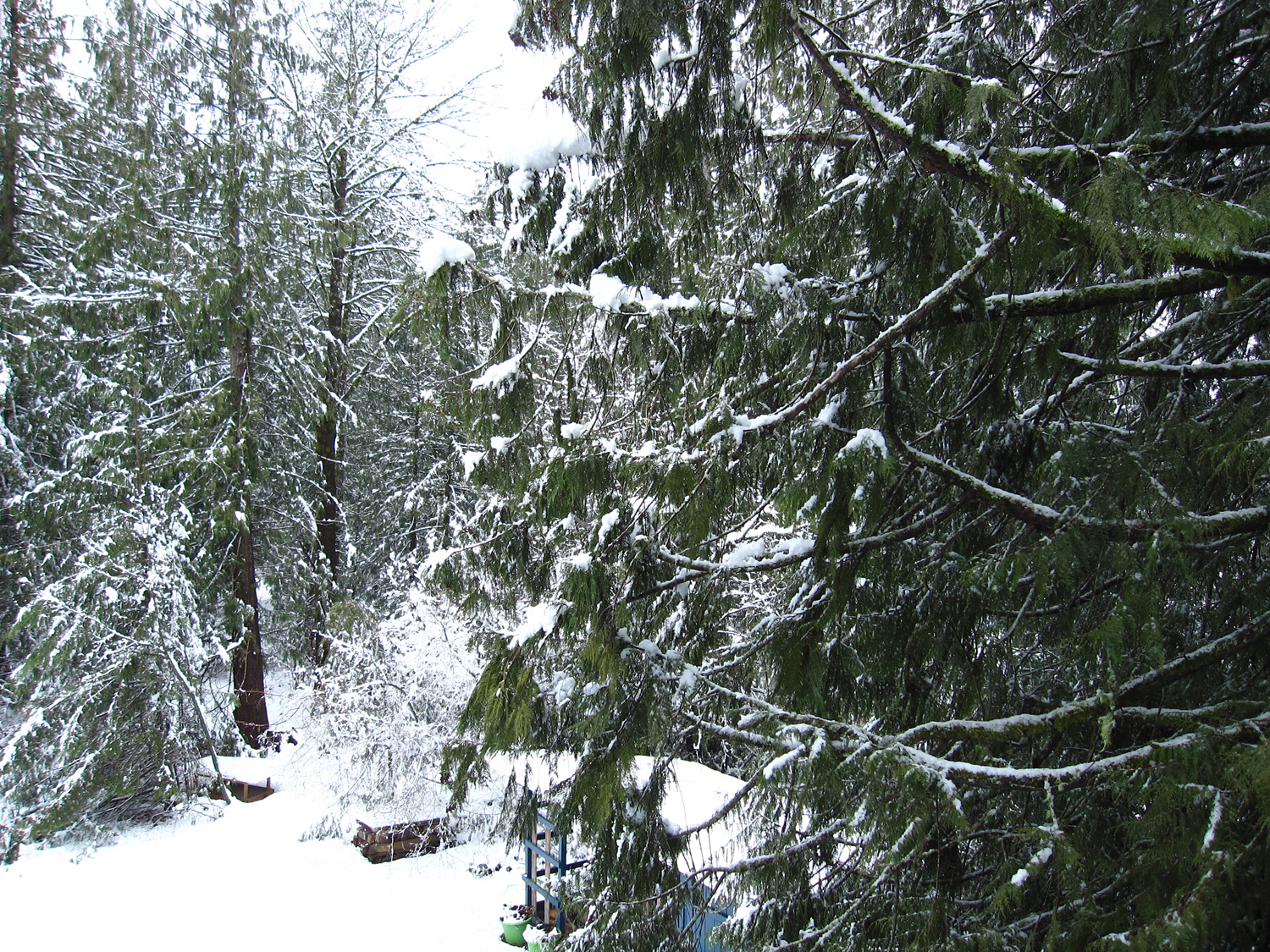 Look out Eunice's studio in Cascade Mountain foothills .