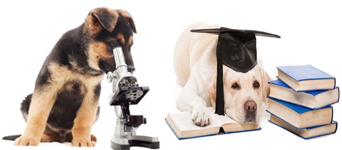 Dog collar research