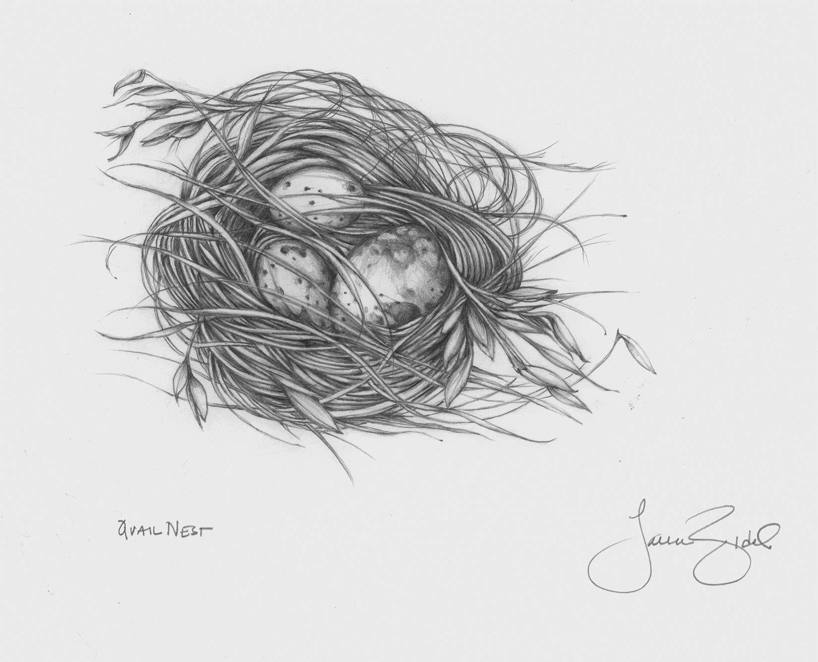 Quail Nest.jpg