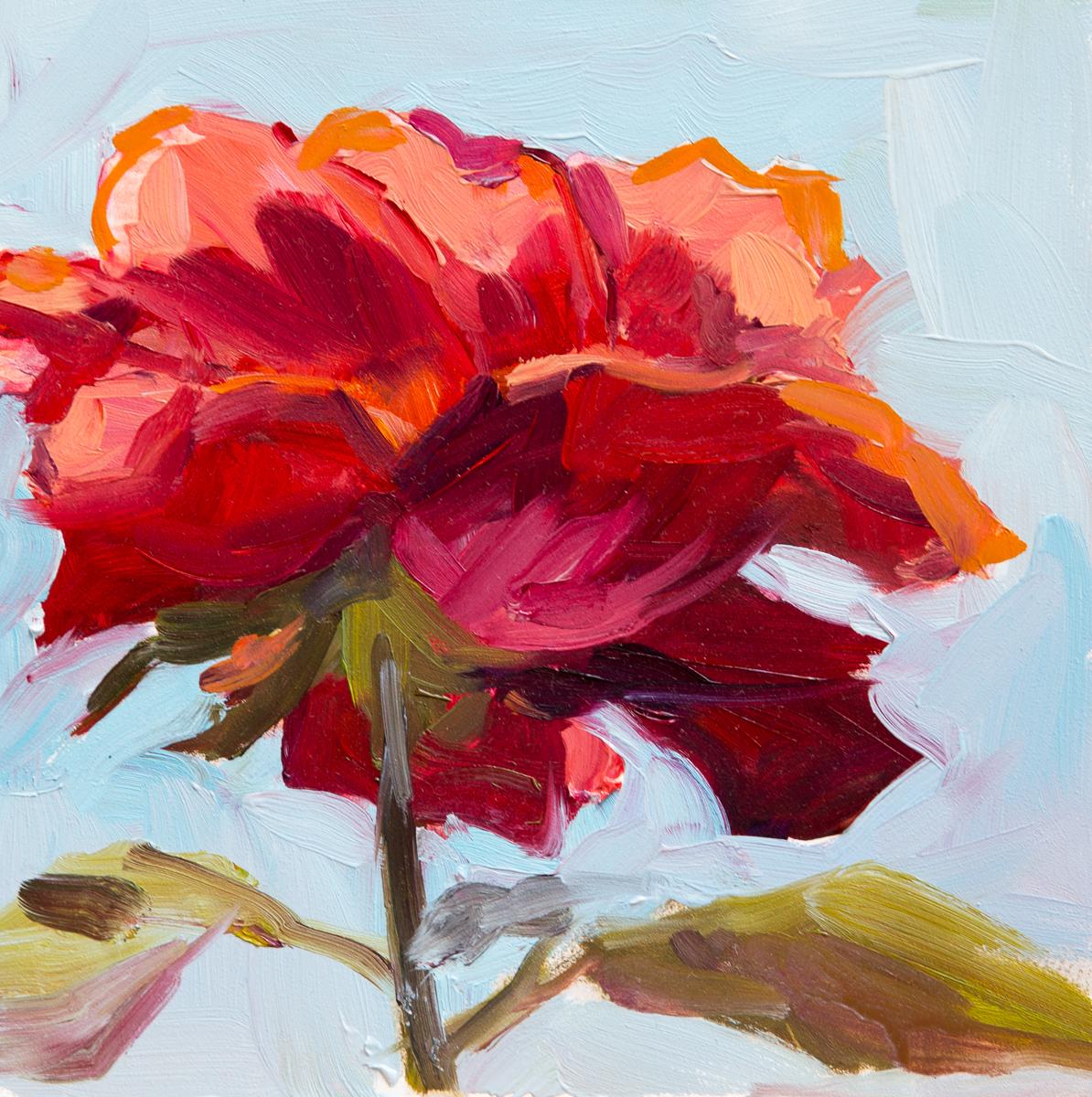 Morning Red Rose